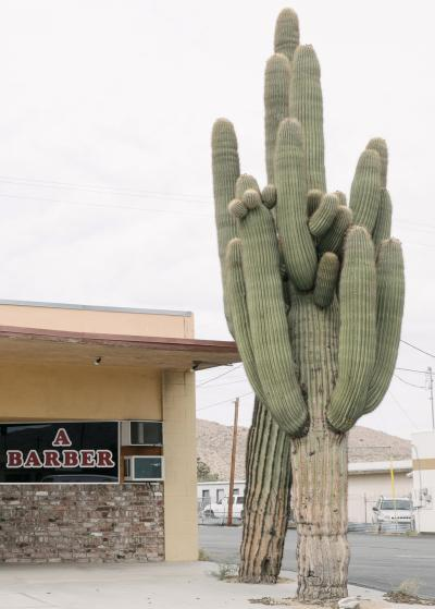 1006_natelee_cocks_75_a_barber_joshua_tree.jpg