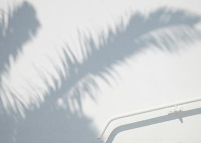 Print art: White palm