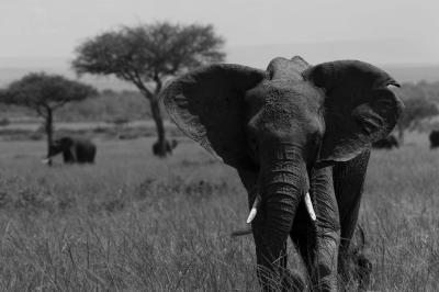249_elephants_3.jpg