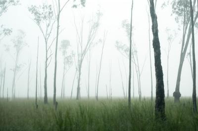 319_misty_eucaliptus.jpg