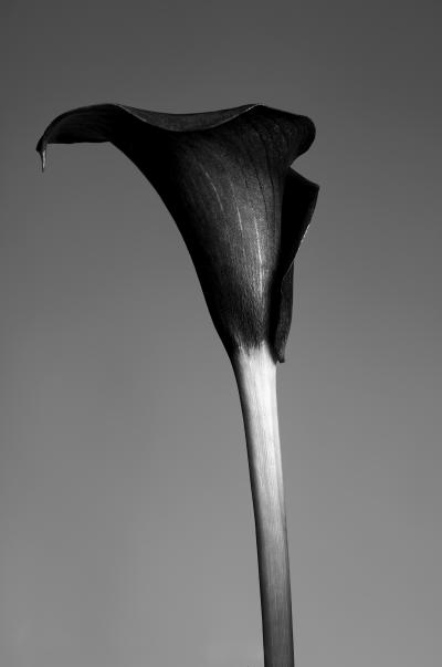Print art: La flor