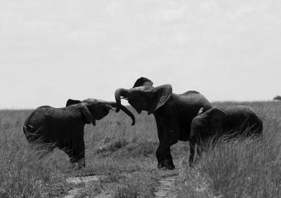 Print art: Elephants at play