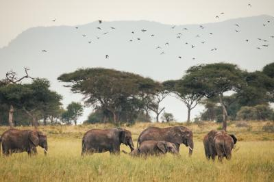 Print art: Elephant herd