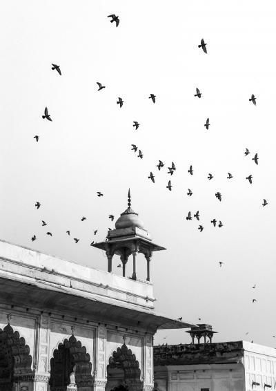 Print art: Free as a bird